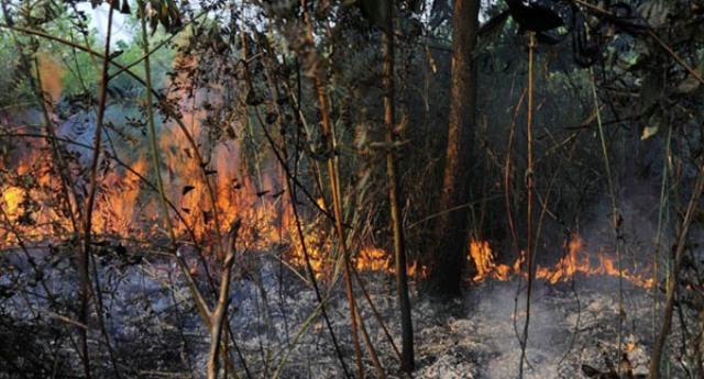 Cerita Santri Berhasil Padamkan Kebakaran Kebun Karet
