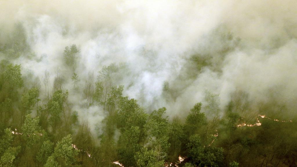 Empat Langkah KLHK Tangani Kebakaran Hutan dan Lahan