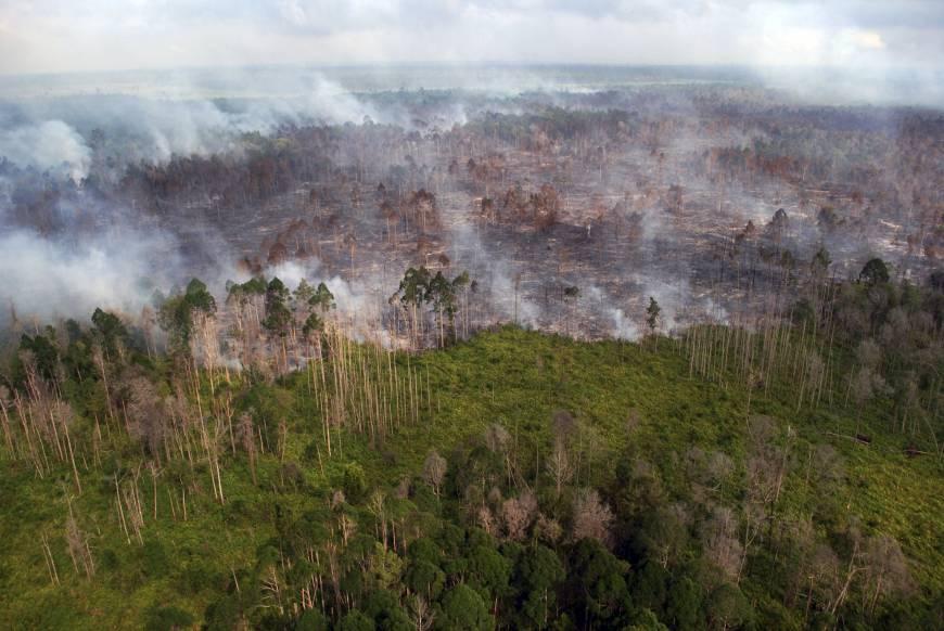 367 Titik Api Muncul di Delapan Provinsi Prioritas Restorasi Gambut