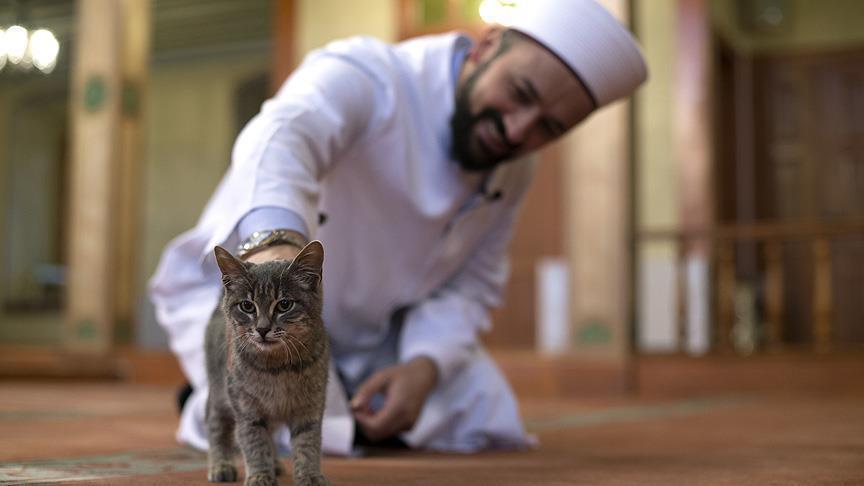 Kucing Lewat di Depan Orang Shalat, Apa yang Harus Dilakukan?