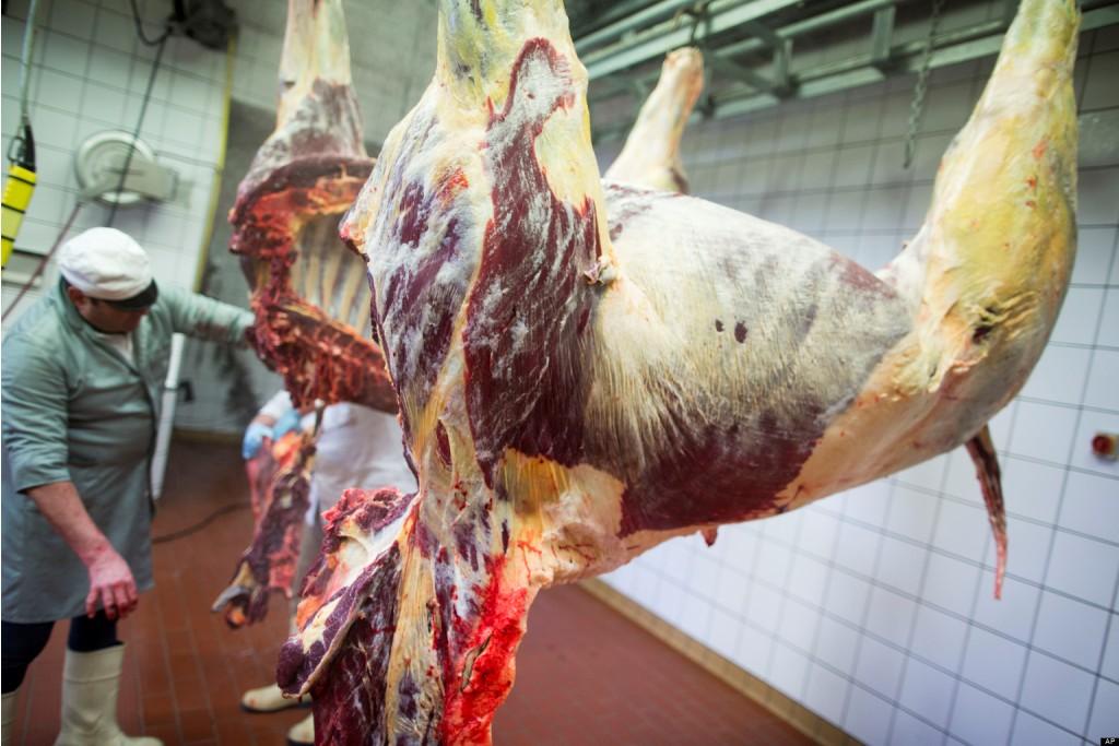 Hukum Mengonsumsi Daging Kuda