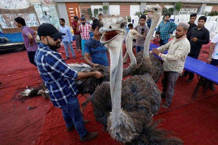 Di Pakistan, Daging Burung Unta dan Rusa Disajikan untuk Sahur