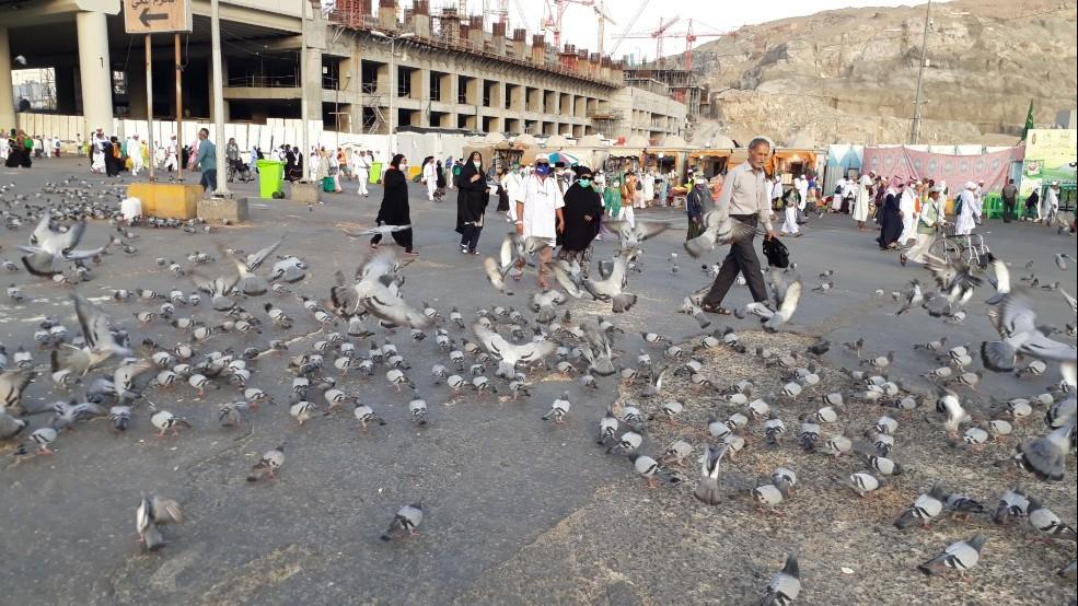 'Misi' di Balik Memberi Makan Merpati di Masjidil Haram