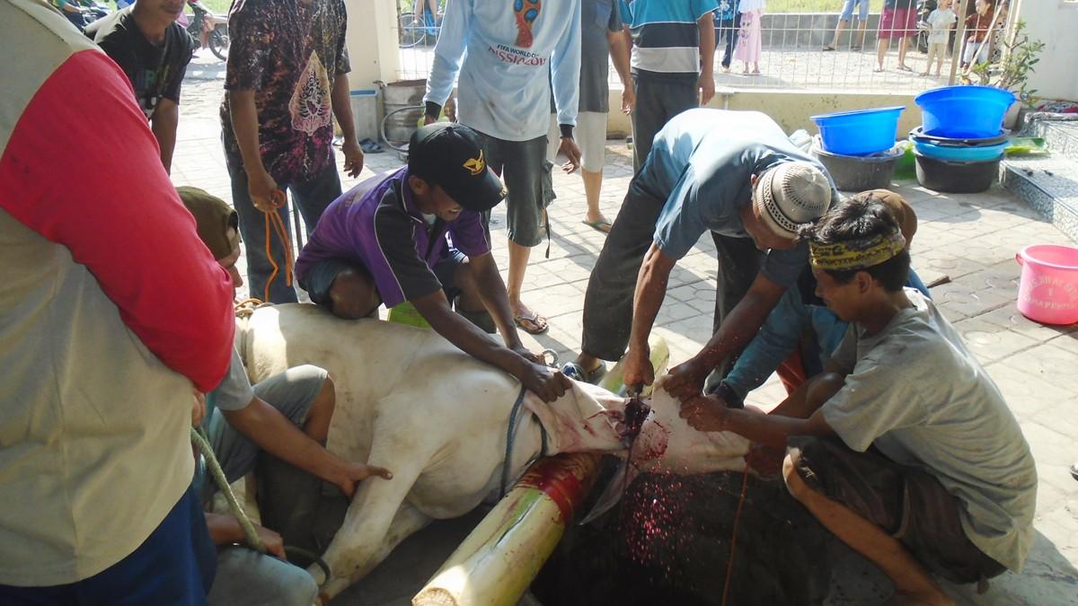 LAZISNU NTB Saluran Daging Kurban ke Kawasan Terdampak Gempa