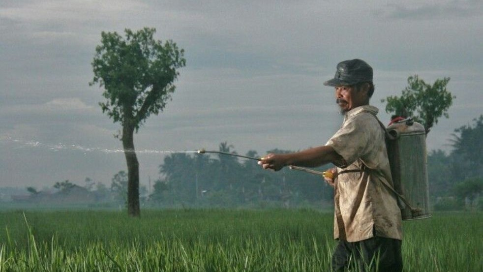 Durasi Kontrak Akad Musaqah yang Perlu Diketahui Petani Penggerap dan Pemilik Lahan