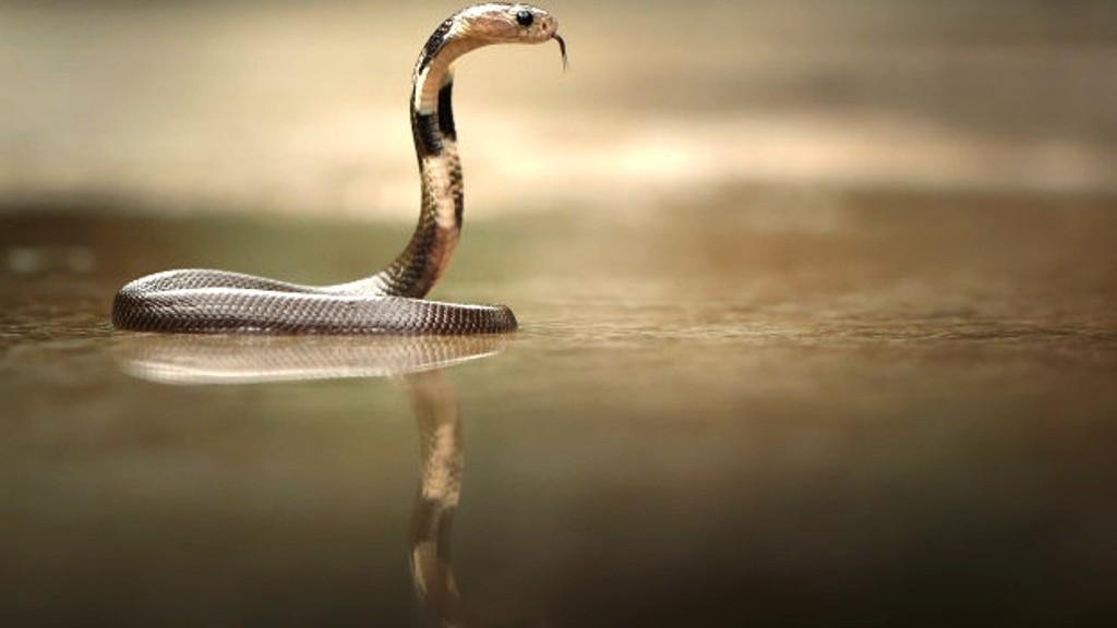 Doa Pengusir Ular Kobra