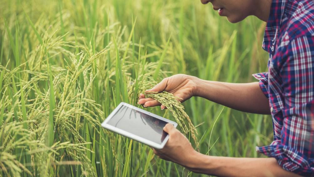 Tiga Jenis Zakat Pertanian dan Cara Menunaikannya