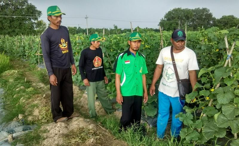 GP Ansor Sumber Kembangkan Pertanian Melon dengan Studi Banding