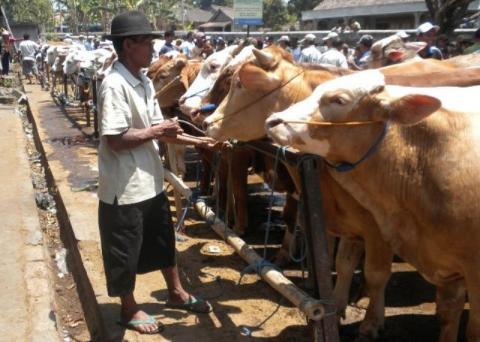 Hukum Pengambilan Jatah Daging atau Kulit oleh Panitia Kurban