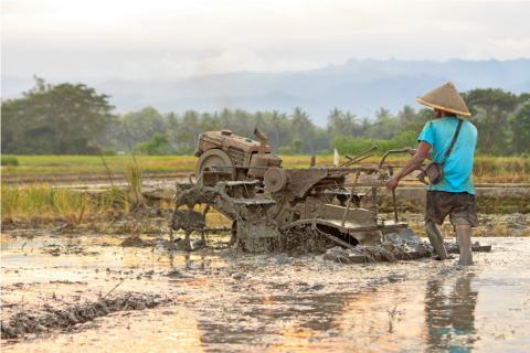 Akar Masalah yang Menghambat Kedaulatan Pangan Indonesia