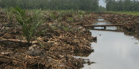Dosen Unusia Jakarta: Penting Jaga Kekhasan Ekosistem Gambut