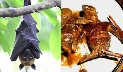 Hukum Membunuh dan Mengonsumsi Daging Kelelawar