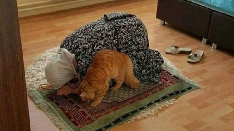 Rontokan Bulu Kucing, Apakah Najis?