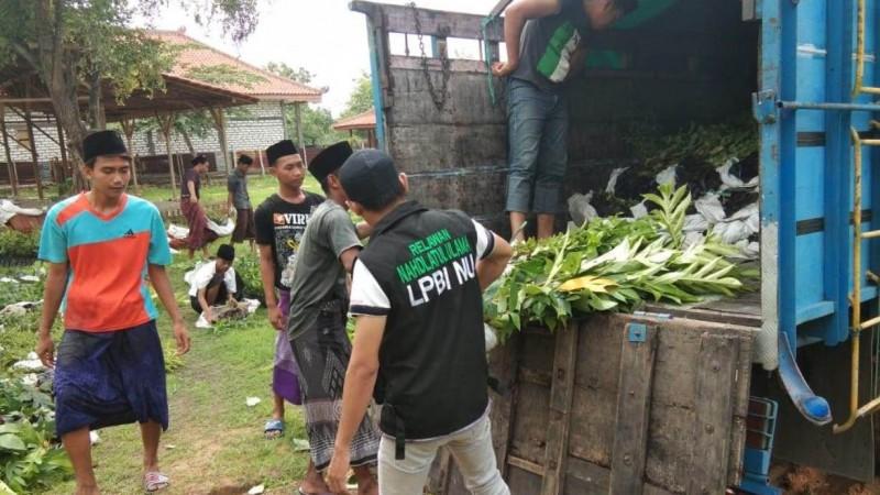 LPBINU Sampang Siapkan 8.500 Bibit untuk Pelestarian Lingkungan