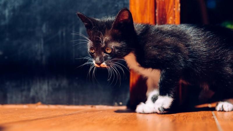 Hukum Membuang Dan Membunuh Kucing