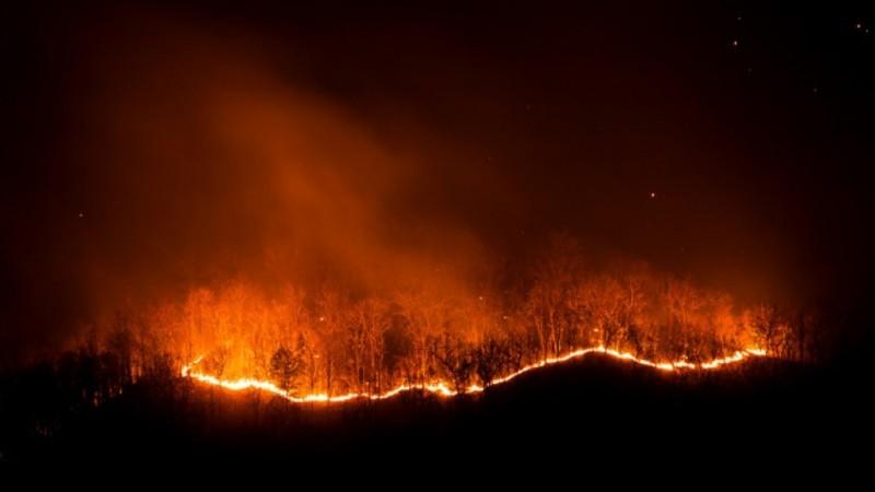Guru Besar IPB Ingatkan Potensi Kebakaran Gambut di Musim Kemarau