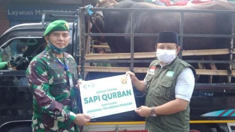 TNI AD Kurban 2 Ekor Sapi Limosin melalui NU Care-LAZISNU