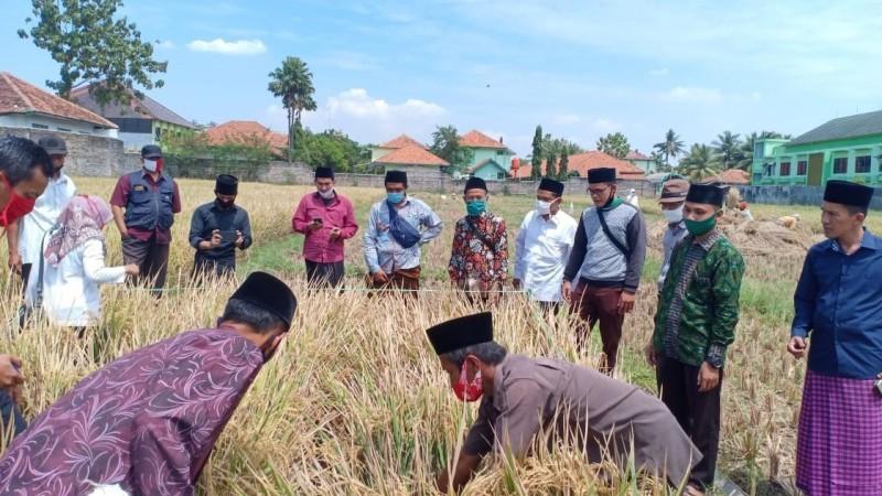 Panen Melimpah Petani Cirebon setelah Gunakan Pupuk Bio Organik Produksi LPPNU