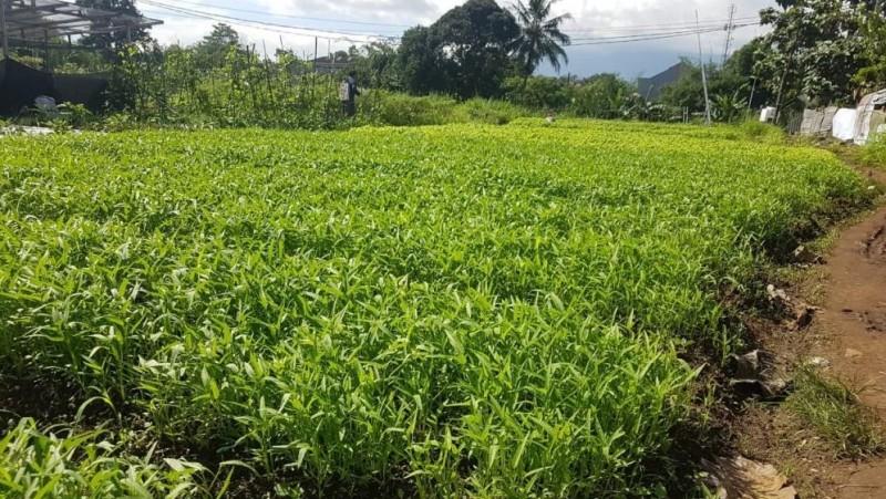 Ikutilah Pekan Mahasiswa Belajar Pertanian KMNU IPB