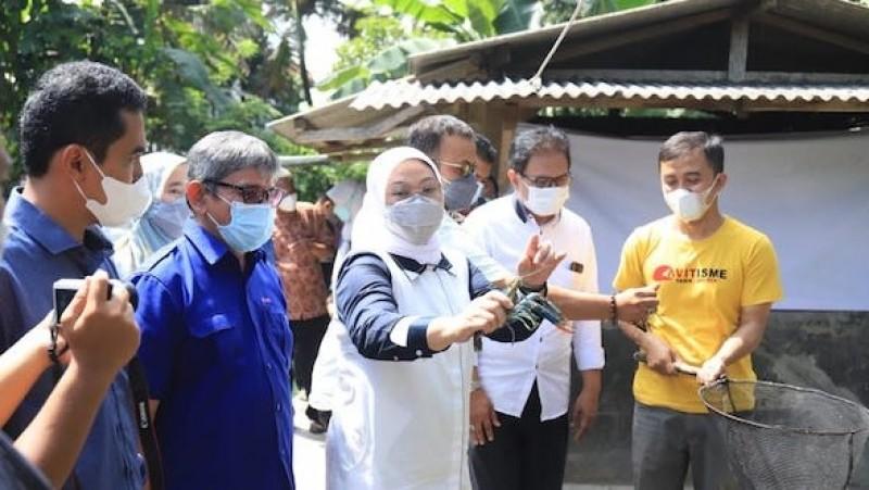 Dari Nila dan Lobster, Menaker Kesengsem Lihat Warga Tasik Bertahan di Masa Pandemi