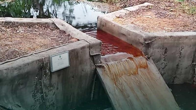 10 Kegiatan Rehabilitasi Mangrove Berbasis Pembangunan Perdesaan