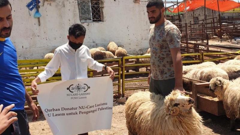 Jelang Idul Adha, LAZISNU Lasem Kurban Domba untuk Palestina