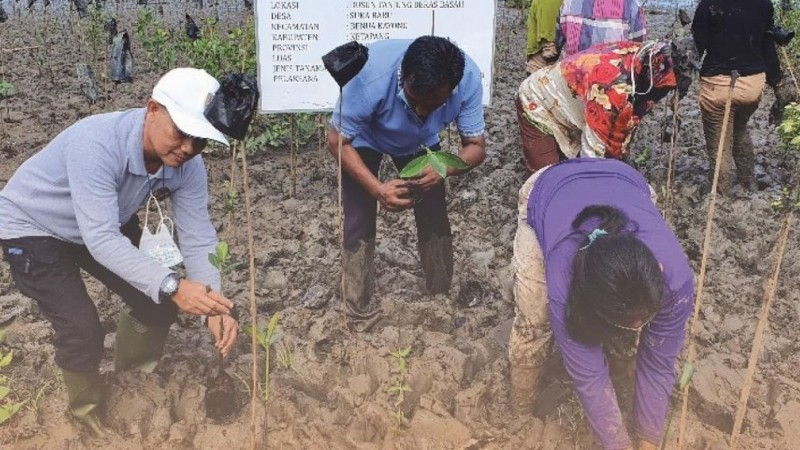 BRGM Tanam Mangrove 15 Hektar di Desa Sukabaru Kalbar