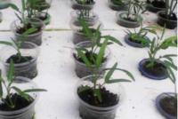 Bisnis Sayur, Ansor Jabar Kembangkan Teknik Hidroponik dan Pupuk Organik
