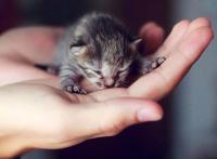 Kucing Malang Pendatang Rahmat Allah