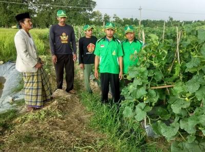 GP Ansor Sumber Rembang Sukses Terapkan Pertanian Organik