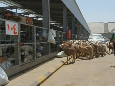 Pasar An'am, Alternatif Jamaah Haji Cari Kambing untuk Bayar Dam