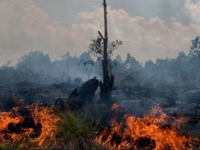 Rugikan Warga, Kiai Anwar Iskandar: Bakar Hutan Haram!