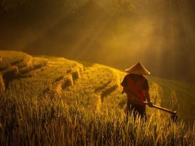 Menanti 'Gebrakan' Undang-Undang Sistem Budidaya Pertanian yang Baru