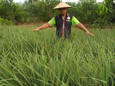 Kembangkan Pertanian Organik, Cak Fyan: Kebaikannya Kembali ke Kita