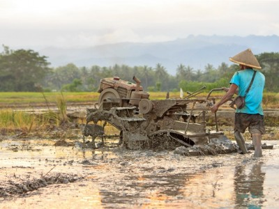 Akad Musaqah dan Kontur Tanah yang Perlu Diketahui Petani Penggarap