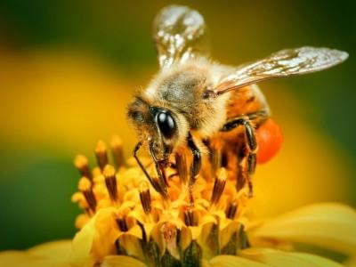 Wujudkan Kemandirian Ekonomi, Basada Lampung Kembangkan Budidaya Lebah