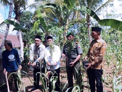 Lestarikan Lingkungan, LPBINU Malang Gelar 'Adapsi Pohon'