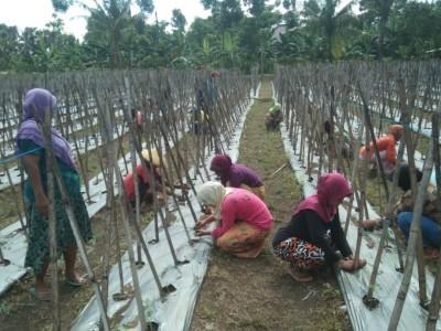 GP Ansor Dorong Pemerintah Desa Berdayakan Sektor Pertanian