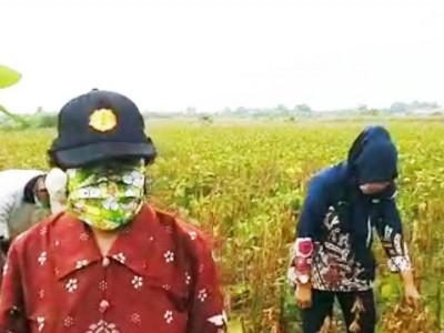 Terapkan 'Physical Distancing', Petani Kendal Siap Pertahankan Produksi Kedelai