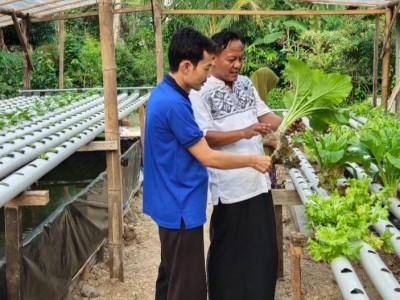 Jaga Ketahanan Pangan dengan Bercocok Tanam Sayuran Hidroponik