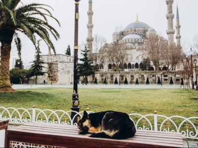 Liur Anjing dan Larangan Berburuk Sangka dalam Fiqih