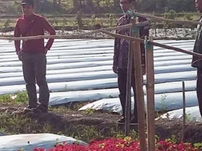 Rintis Kelompok Usaha Bersama, LPPNU Bojonegoro Kembangkan Pertanian