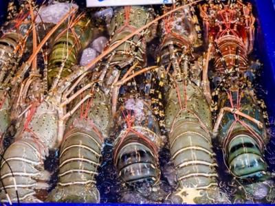 PBNU Minta Menteri KKPHentikan Ekspor Benih Bening Lobster