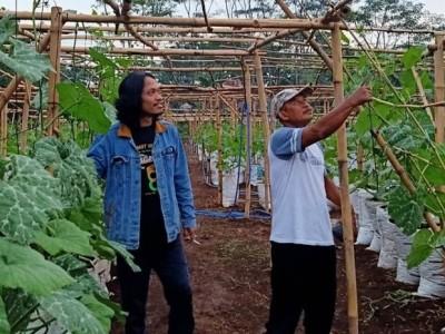 Lesbumi NU Pekalongan Kembangkan Agrowisata Labu Madu