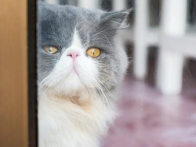 Hukum Jual Beli Kucing Peliharaan