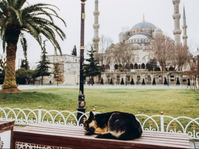 Sayyidina Umar bin Abdul Aziz dan Seekor Anjing