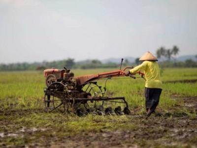 Sektor Pertanian Tumbuh Positif 2,15 Persen di Kuartal III 2020