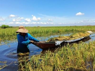 Salasiah, Pahlawan Keluarga Masa Kini dari Kalimantan Selatan