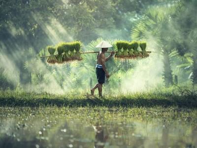 Problem Pertanian di RI: Pupuk, Lahan Menyempit, Akses Modal Rumit, Teknologi Tertinggal