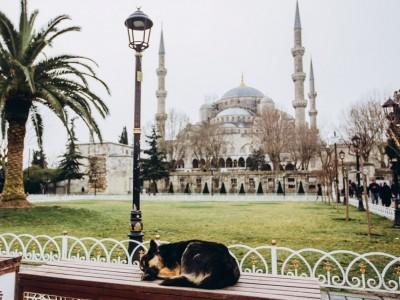 Hukum Menganiaya Anjing